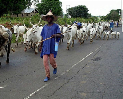 "No fewer than 30 people are feared dead after a group of armed herdsmen, numbering over 400, attacked and burnt down five villages, Bolki, Bang, Nzumoso, Boki and Gon, in Numan and Lamurde local government areas of Adamawa State on Wednesday night. According to the Sun, the herdsmen rode on motorcycles and in pick-up vans and began killing and burning down houses in the villages. A resident who escaped unhurt, accused the military of failing to engage the herdsmen. ""The soldiers retreated into town while the herdsmen spilled blood all over the place,"" the source said This incident comes after Tuesday May 1st suicide attack on Mubi town that left over 80 people dead."