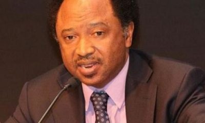 Senator Shehu Sani's Aide On Youth Matters, Bashir Ahmad Kidnapped