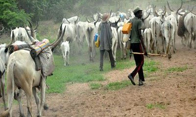 Herdsmen Kill Taraba Monarch, 28 Others In Fresh Attacks In Taraba