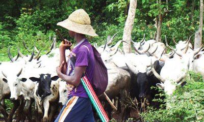 Herdsmen Killings: Herders Swear Oath In Ekiti