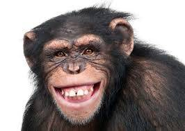 Monkey Swallow N70m Northern Senators Forum Money