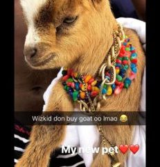 See Davido's Hilarious Reaction To Wizkid's New Pet