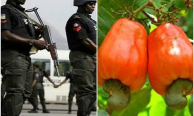 5 dead, 50 Houses Razed, As Kogi Communities Clash Over Cashew