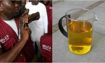 Youths In Adamawa Now Get High On Human Urine – NDLEA