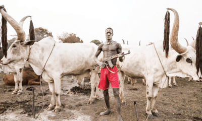 Herdsmen Kill Three Farmers In Fresh Benue Attacks