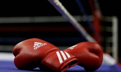 Boxer Collapses, Dies During Training Session
