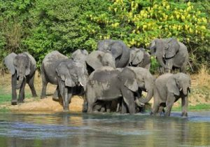 Two Nigerians Killed By Elephants In Yankari Reserve