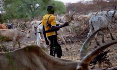 We Have Evidence To Show That Herdsmen Killings Are Politically Motivated – Group