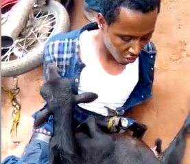 Pastor Caught Stealing Goat Publicly Humiliated In Anambra (video)