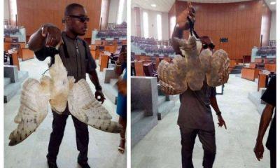 Strange Bird Allegedly Found Inside Akwa Ibom House Of Assembly