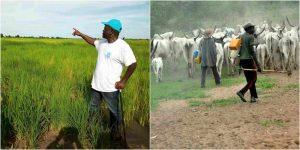 Herdsmen set Governor Ortom's rice farm ablaze lailasnews 3 Share Herdsmen set Governor Ortom's rice farm ablaze