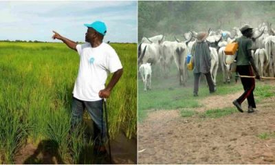 Herdsmen set Governor Ortom's rice farm ablaze lailasnews 3 Share Herdsmen set Governor Ortom's rice farm ablaze